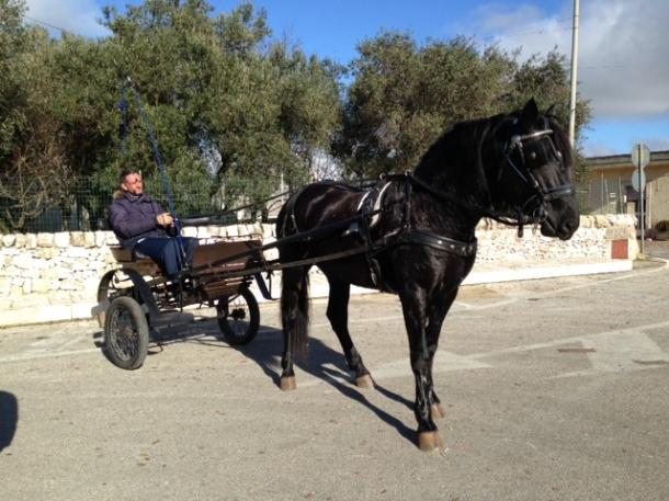 cavallo, passeggiate in calesse