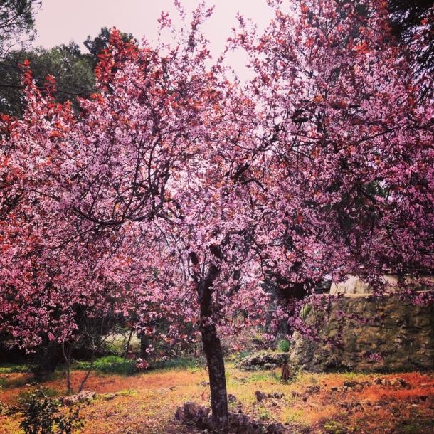 spring 2014