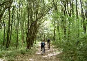 ciclotrekking nel bosco_coop. Serapia (3)