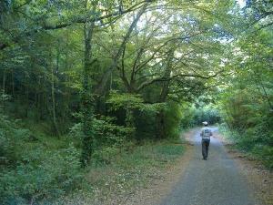 bosco Pinelle
